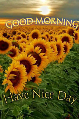 Good Morning Quotes, Good Morning Wishes, Good Morning Msg, Good Morning Quotes For Her, Good Morning SMS, Good Morning Images