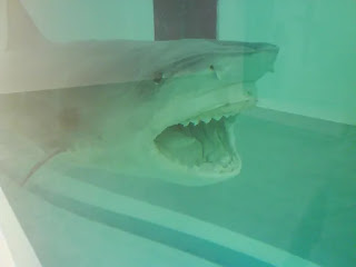 Shark Understanding Contemporary Art