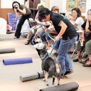 exercício para as pernas traseiras para cães