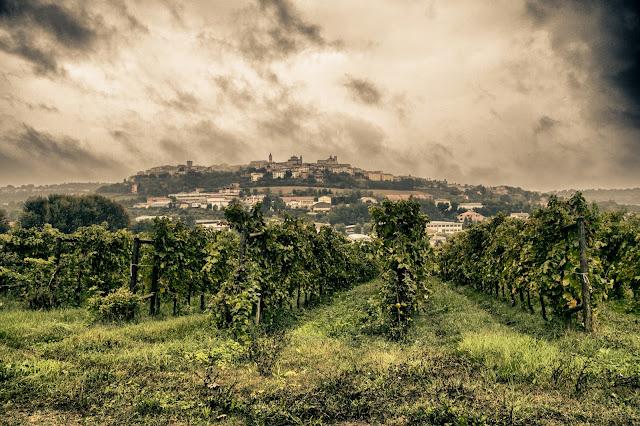 Civitanova Marche-Locanda Fontezoppa-Vigneti