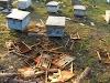 """Εισβάλλουν στα μελίσσια, γυρίζουν κυψέλες, και τρώνε το μέλι: Φρίκη προκαλλούν οι """"ομολογίες"""" μελισσοκόμων...."""