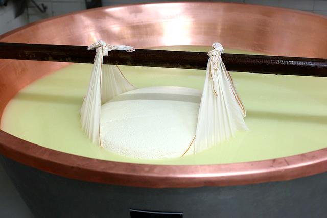 Fabrication du parmesan. Égouttage