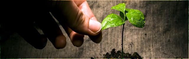 Φυλλοδιαγνωστική και χημική ανάλυση των φυτών