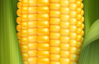 Corn Cultivation