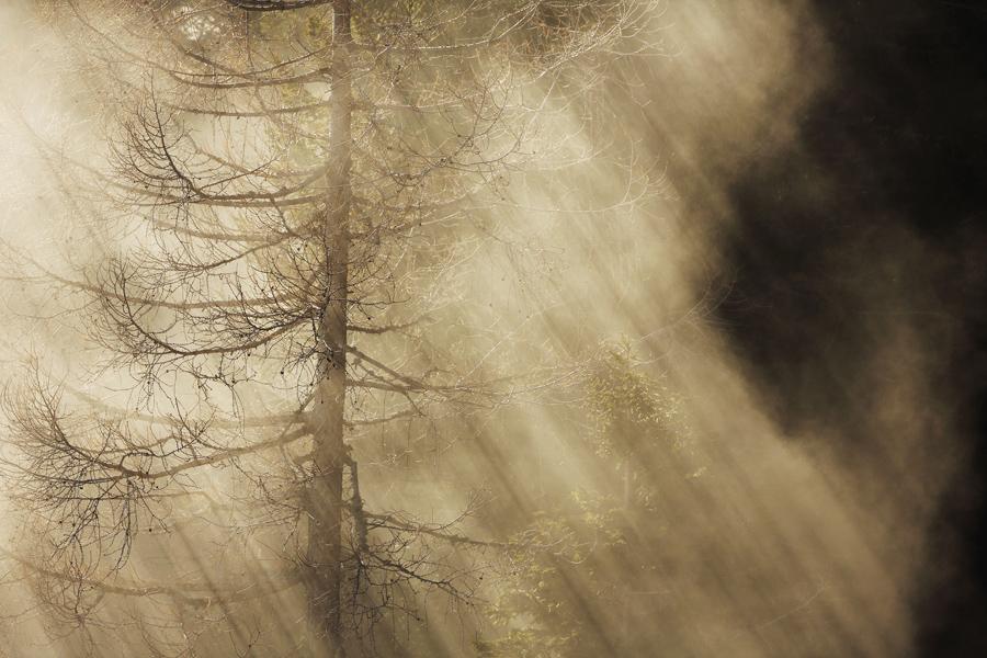 Mare di nebbia nel lariceto