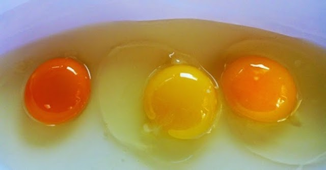 Can you tell which egg came from a healthy chicken?