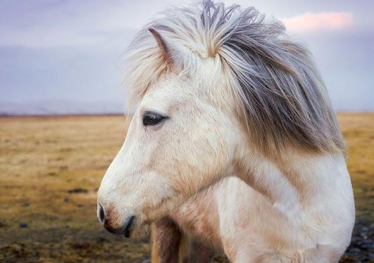 أجمل صور خلفيات خيول 11