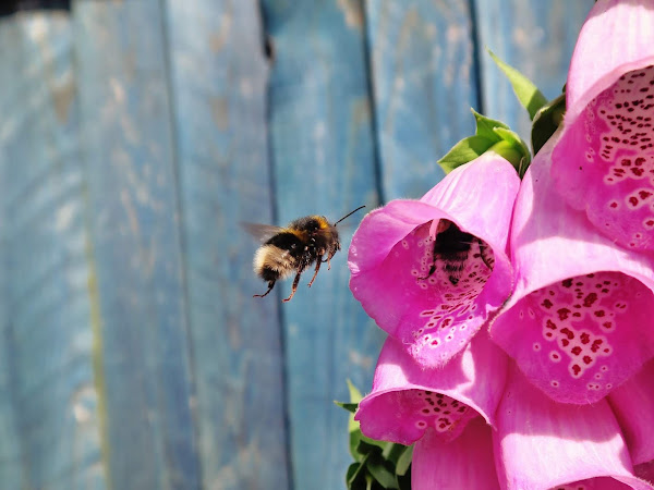 10 Tips to have a bee friendly garden this summer