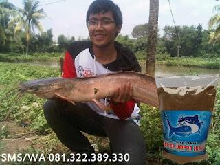 Umpan Serbuk Ikan Lele