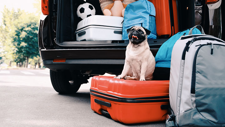 traveling-with-a-dog-to-hawaii