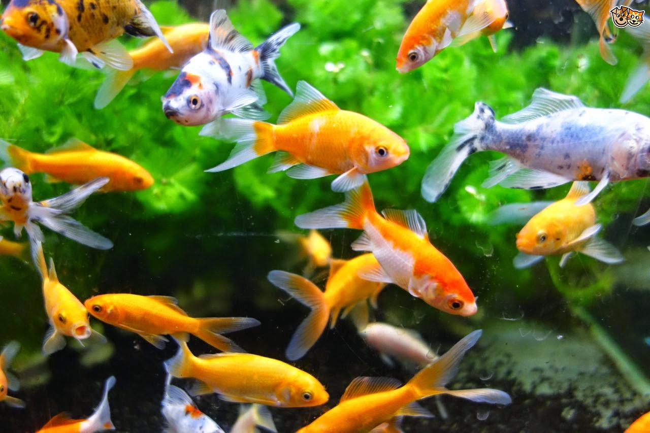 4 of the best starter pets for kids fun animals wiki for Taking care of fish