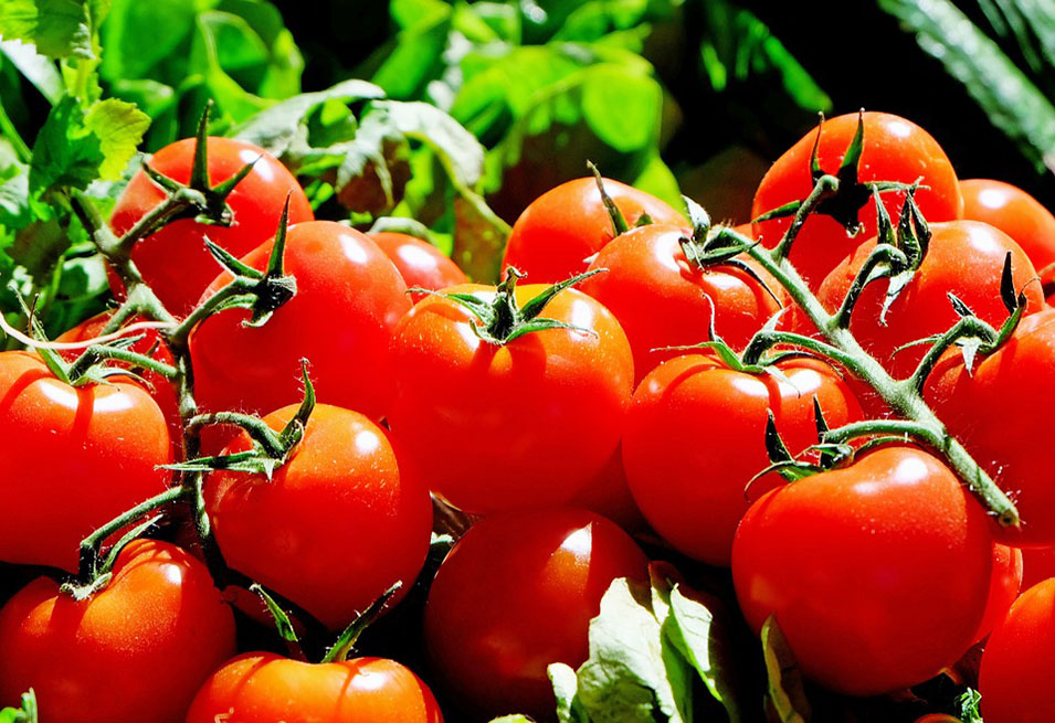 14 Great Benefits of Tomato for Health
