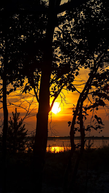 Sunset Nature Silhouette Wallpaper