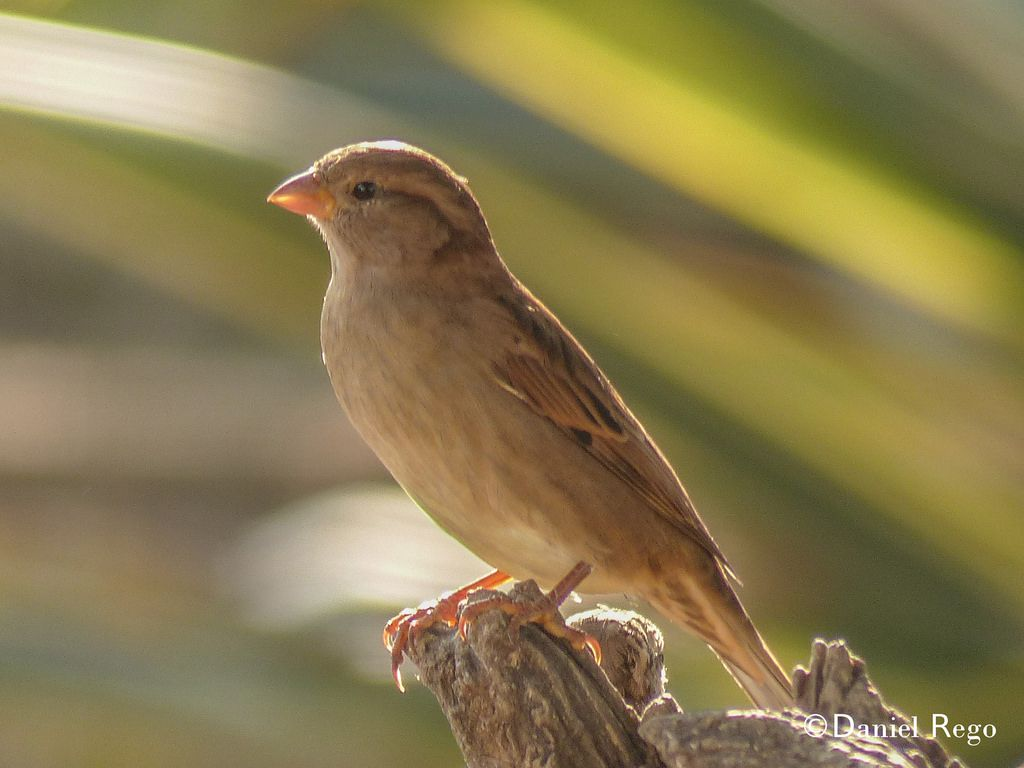 Galicia Bird by Daniel Rego Alra