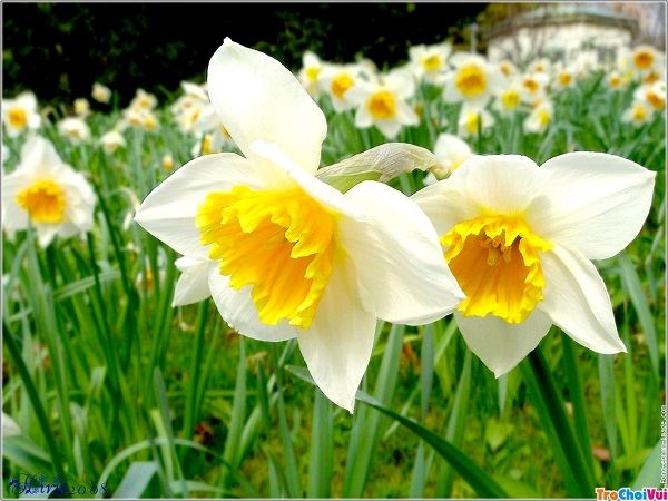 hoa thuy tien dep 2