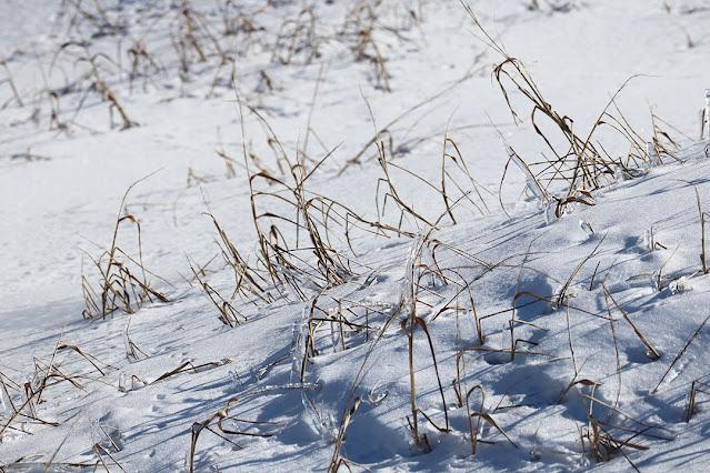 Frozen grass by Marie Viljoen