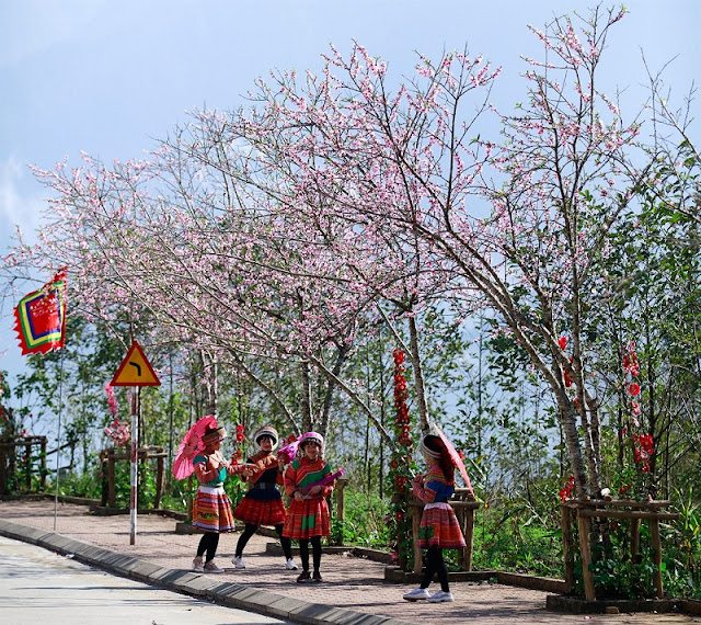 Attractive beauty of Sapa in the season of blooming peach