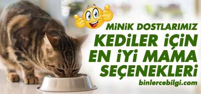 En iyi kedi maması markaları, kedi maması yorum, kısır kedi maması, yavru kediler için kitten mamalar, kedi mama seçimi, mama çeşitleri, fiyatları.