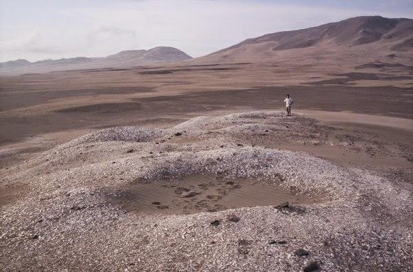 fosil kerang, el nino