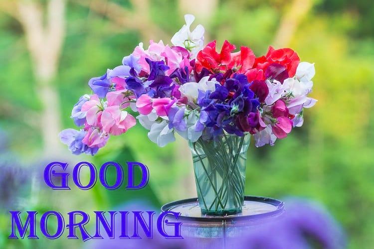 Good Morning Sweet Peas Flowers