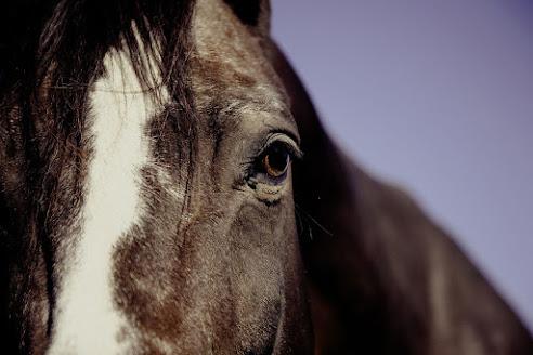 أجمل صور خلفيات خيول 15