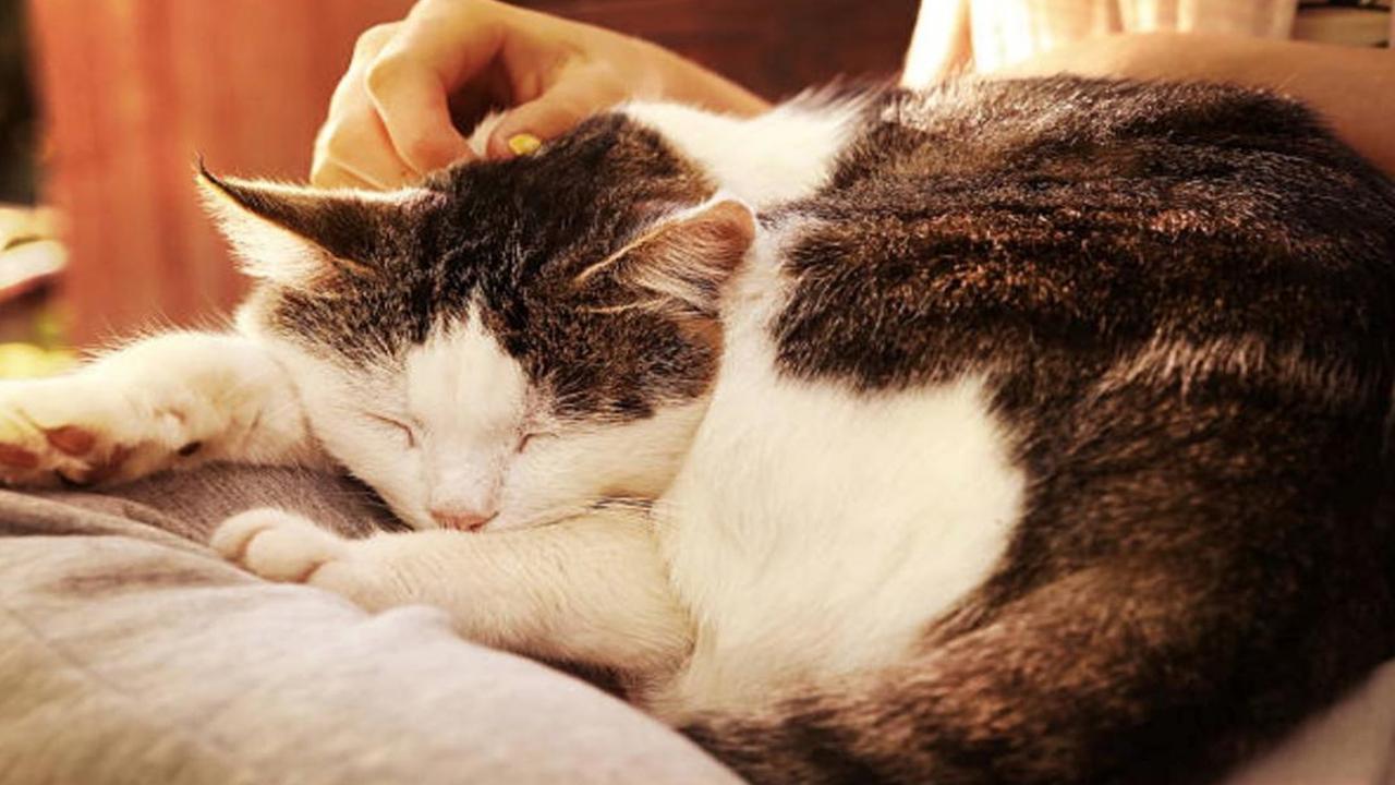 Vermifuges et chatons  Les vers communs et leur traitement