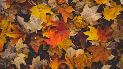 Autumn, orange, brown, fallen leaves