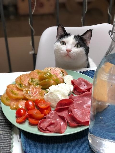 テーブルの猫