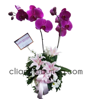 toko-bunga-surabaya-jual-buket-bunga-anggrek-bulan