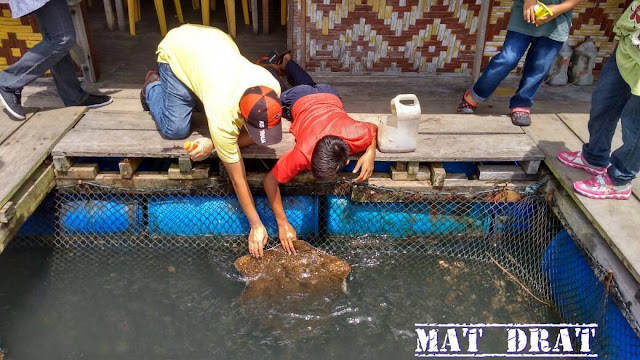 Tempat Menarik di Langkawi Mangrove Tour KILIM Geopark