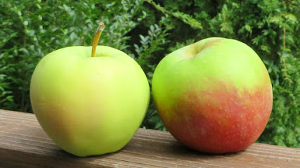 Two apples, one green with small faint pink blush, the other green with larger red blush.