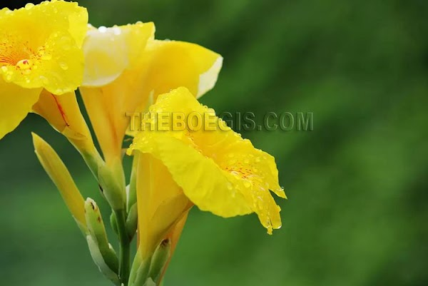 Benefits of Flower Tasbih efficacy for body health
