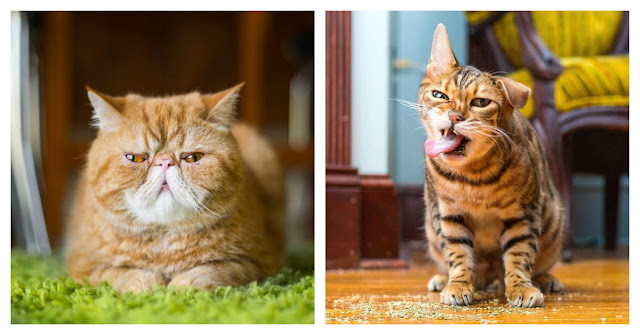 The 12 Moods Of Cats You Go Through On A Daily Basis
