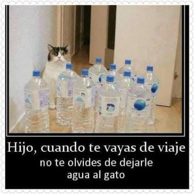 Hijo, cuando te vayas déjale agua al gato