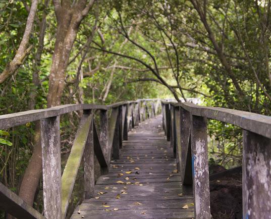 Hutan Mangrove Marga Sari Kampoeng Baroe