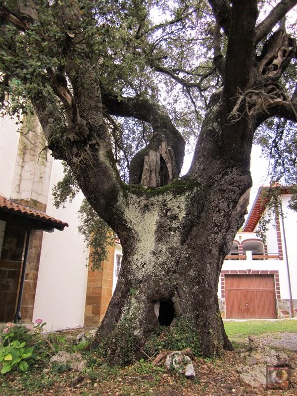 Encina de San Esteban en Galdames (Bizkaia)