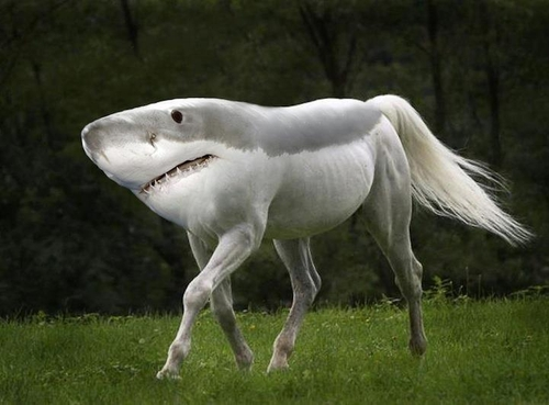 05-Shorse-Gyyp-Reddit-Animal-Mashups