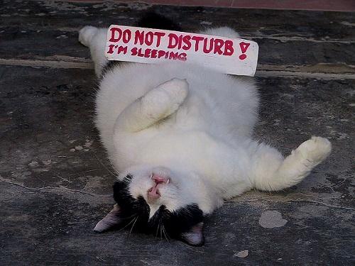 Funny Good Night Cat Sleeping Image