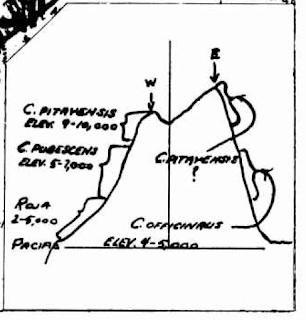 Dibujo de areas montañosas con quina