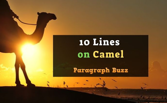 10 Lines on Camel