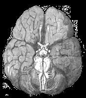 https://www.oxfordsparks.ox.ac.uk/content/revealing-brain-online-exhibition