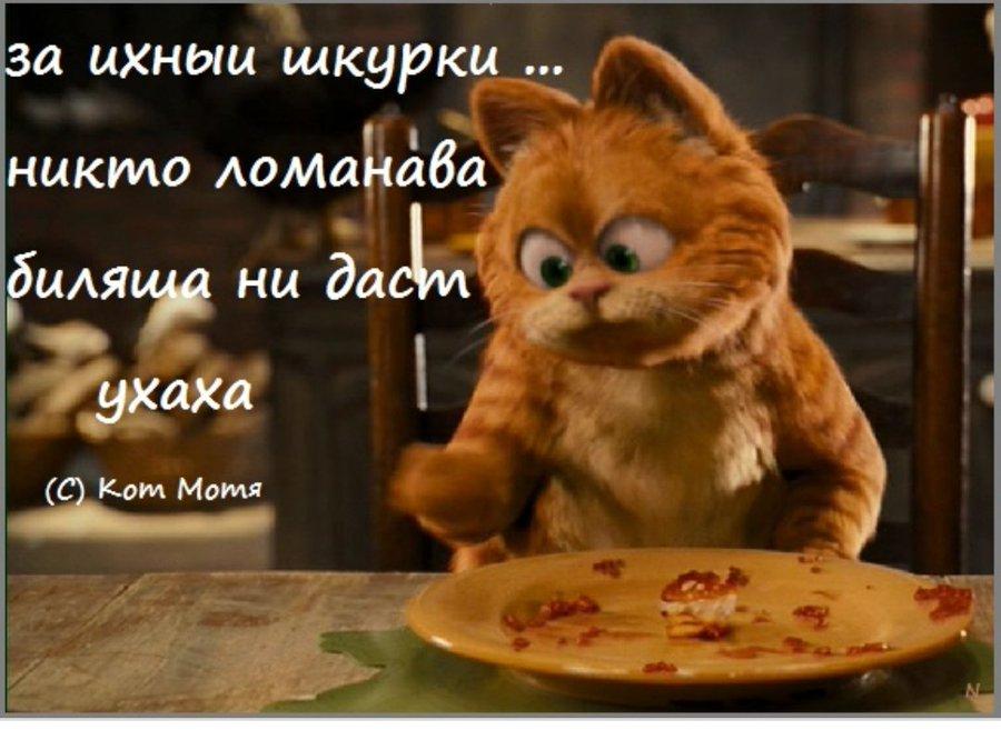 Блог Кота Моти  - Страница 2 EpbymJXXYAAQbzh