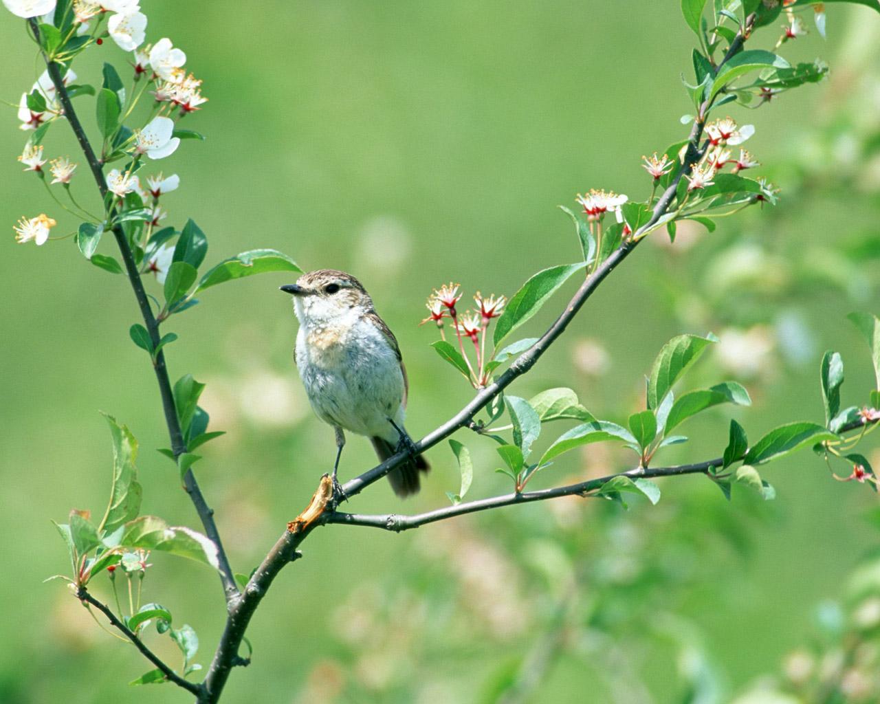 spring bird on a - photo #10