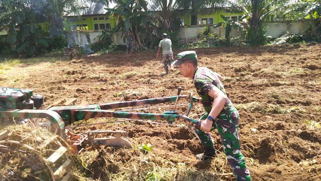 Kekompakan Anggota Koramil 04/Meureubo Dalam Menyiapkan Lahan Pertanian