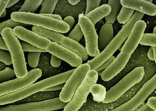Bakteri Patogen