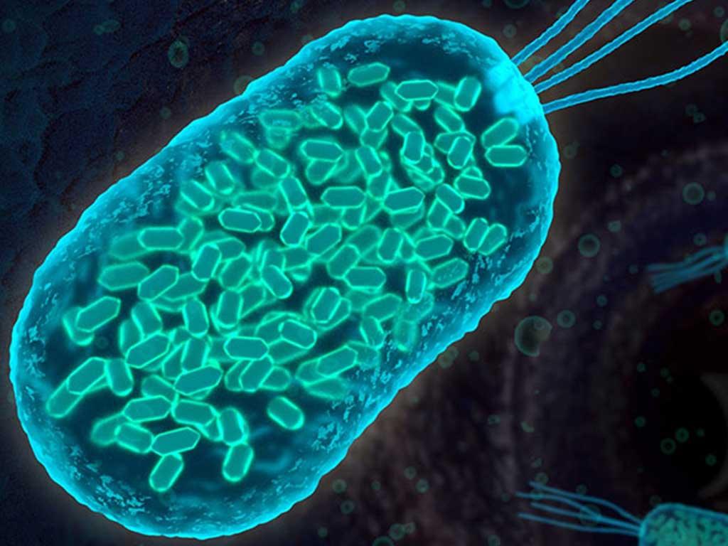 Bakteriyolojinin Tarihçesi ve Evrimi Hakkında Bilgi