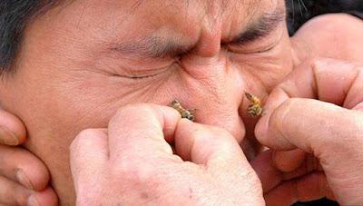 السم النحل المنقى