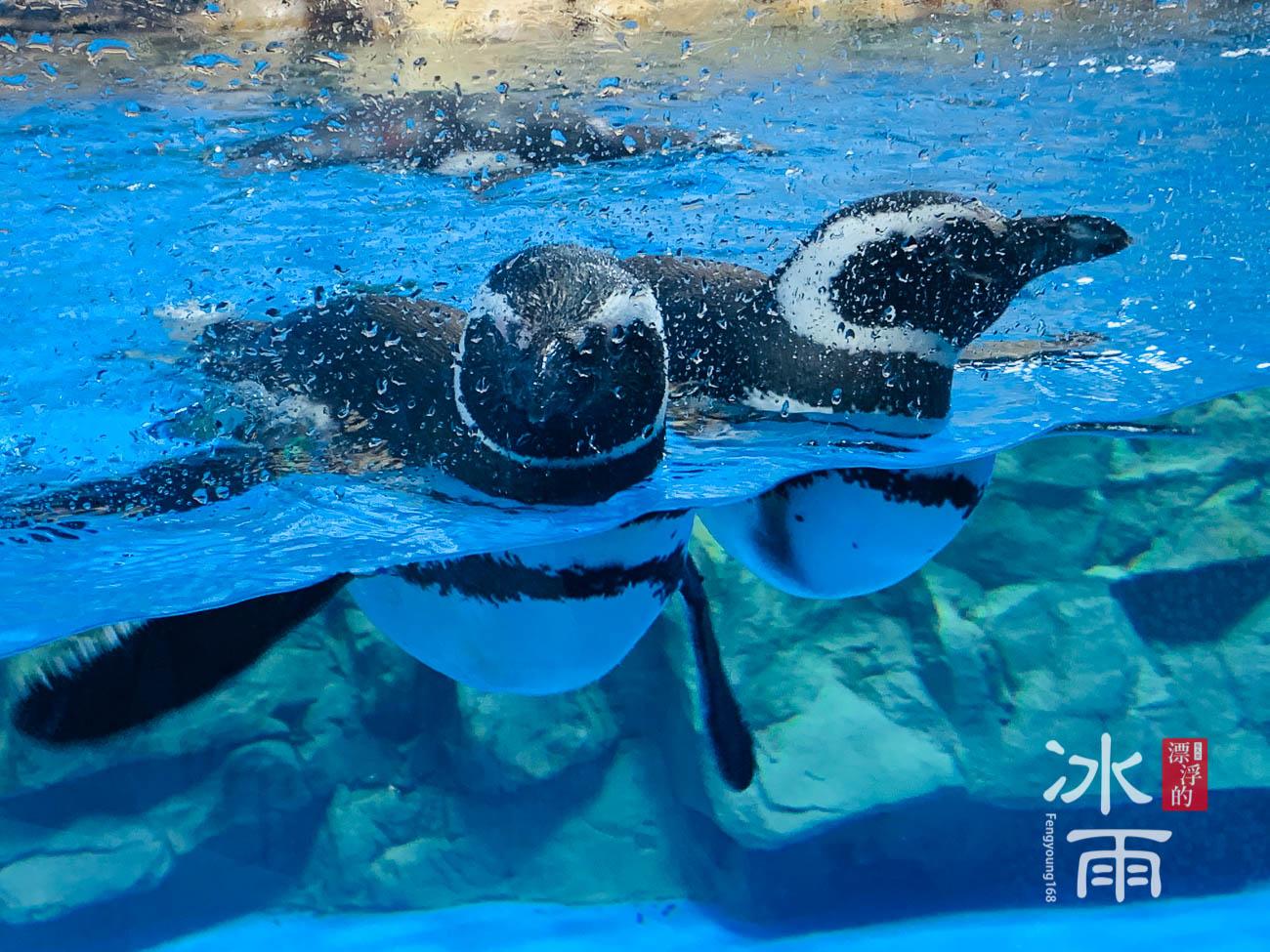 Xpark水族館|企鵝奇遇