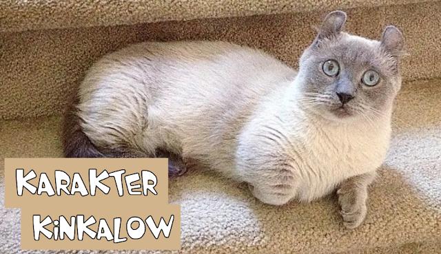 Sifat Kucing Kinkalow