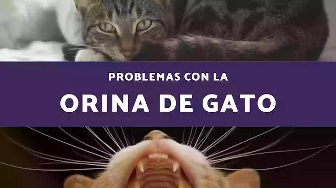 ¿Problemas con la orina de gato? Sigue estos consejos.